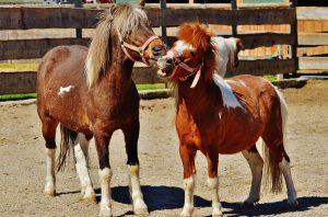 horses-1348287_960_720